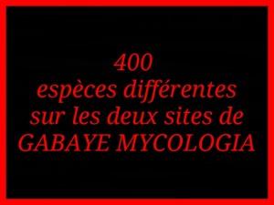 Champignons du Nord Gironde dans Accueil 400-especes-300x225
