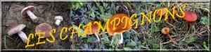 bandeau11-300x75 dans Accueil