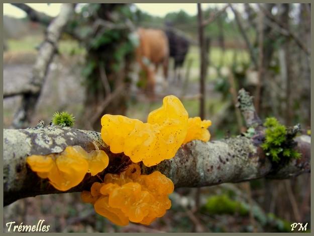 mimosaettrmelles020.jpg