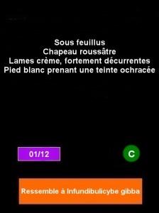 fiche-lepista-flaccida-224x300