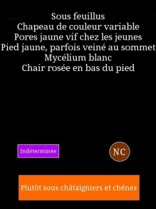 fiche-xerocomus-224x300
