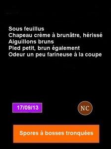 fiche-hydnellum-concrescens-224x300